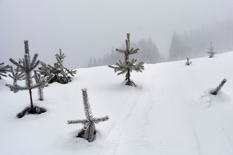Rhodope, winter